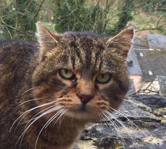 Larochette Cat